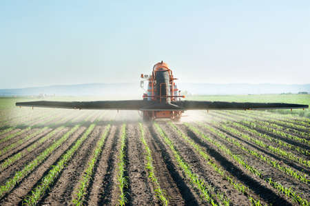 agronomic: Tractor fertilizes crops corn in spring Stock Photo