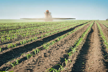 fertilizer: Tractor fertilizes crops corn in spring Stock Photo