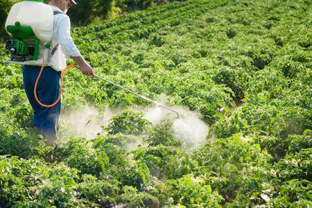 Man spraying vegetables in the garden photo