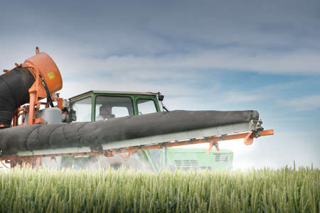 monoculture: Tractor spraying wheat in the spring