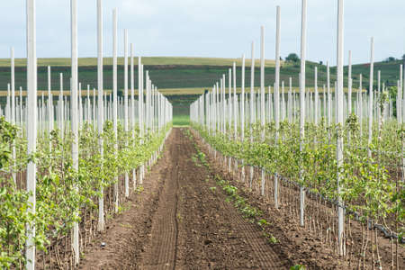 verticals: Line with the new apple trees