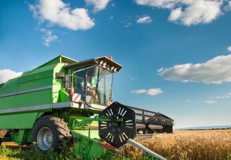 cosechadora: combinar trabajando en el campo de trigo
