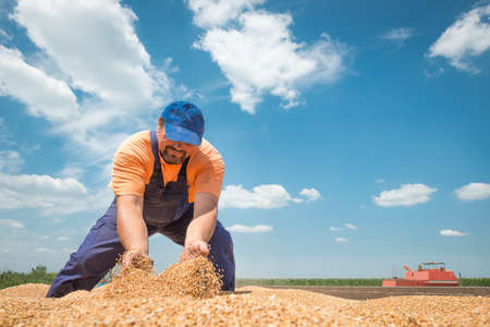 happy farmer during harvest wheat Stock Photo - 20689736