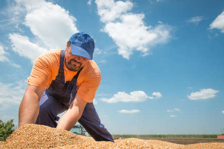 happy farmer after harvest of wheat Stock Photo - 20689738