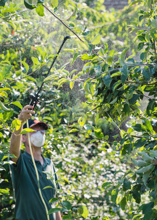 worker spraying pesticide on fruit trees photo