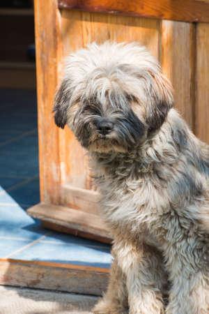 fend: cane a guardia della porta di casa