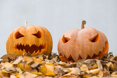 passionately: two halloween pumpkins on the dry leaves
