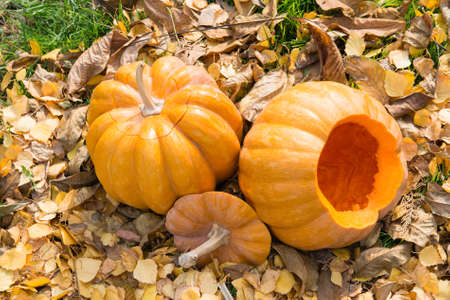 passionately: two orange pumpkins with dry leaves