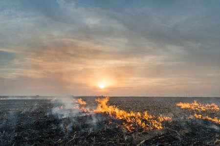 Spalanie słomy na polu Zdjęcie Seryjne