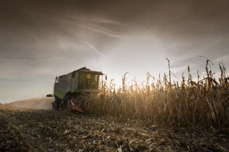 agriculture machinery: Combine harvesting crop corn grain fields