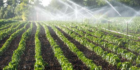 agriculture industrial: Irrigation system on green field
