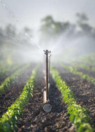 Sistema de riego en campo verde Foto de archivo