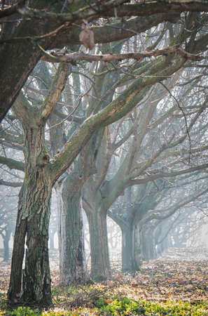 industry moody: walnut wood in the fog