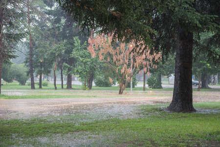 road autumnal: Autumn rain in the park Stock Photo