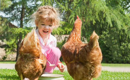 Girl feeding chickens in farm photo