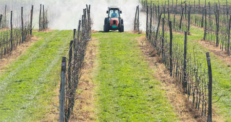 apple orchard: spraying apple orchard in spring