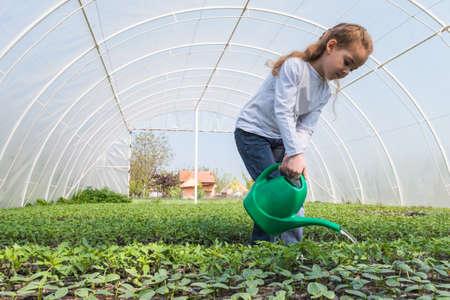 klein meisje het water geven zaailingen Tomaat Stockfoto