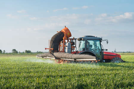 chemical fertilizer: Tractor spraying wheat in spring