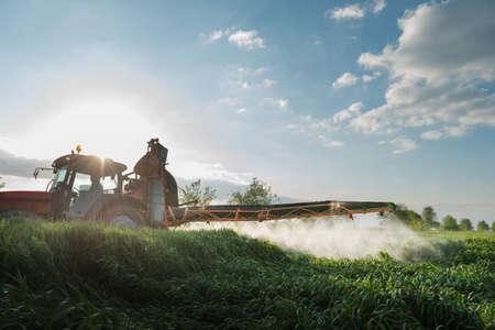 cultivo de trigo: Tractor fumigación de trigo en primavera Foto de archivo