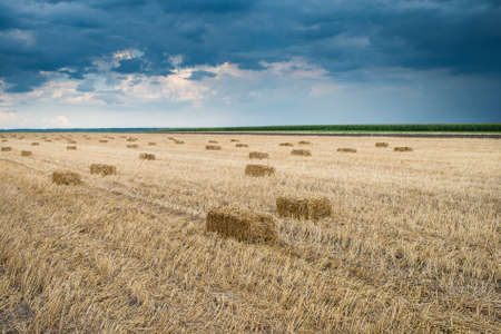bale of straw in the field of stubble photo