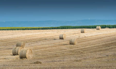 yields: Straw bales on farmland in the sunset