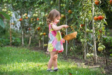 ni�as peque�as: ni�as recogieron tomates
