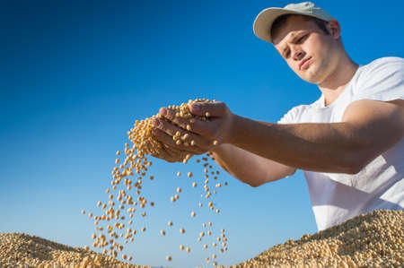 Worker holding soy beans after harvest