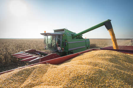 Corn harvest in autumn Editorial
