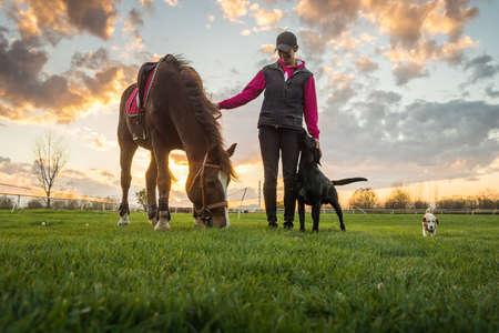femme a cheval: Fille et le cheval au coucher du soleil Banque d'images