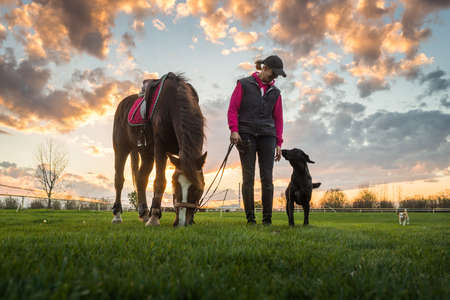 Girl and horse at sunset photo