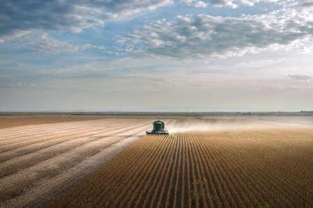 agricultura: La cosecha de frijoles de soja con combinar Foto de archivo