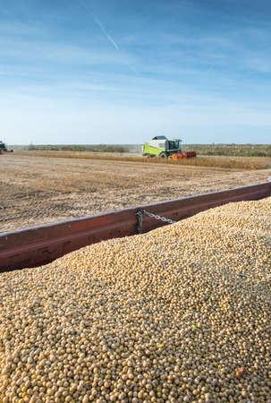 cosechadora: La recolección de haba de soja