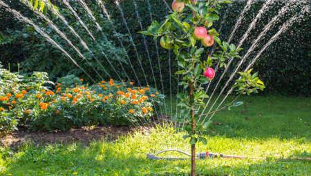 Sprinkler watering the garden