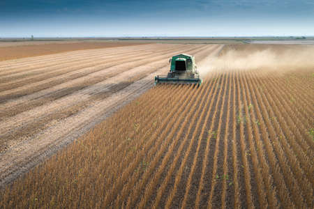agriculture machinery: Harvesting of soybean field with combine Stock Photo