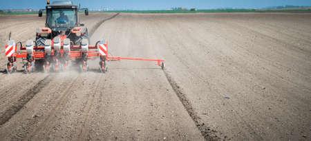 siembra: la siembra de trigo en la primavera