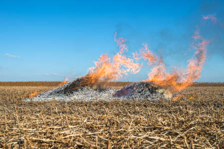 controversial: Burning straw in a field