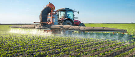 is cultivated: tractor spraying pesticides on soy bean