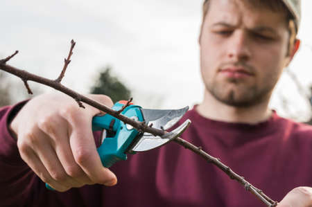 secateurs: young man trimming trees with secateurs Stock Photo