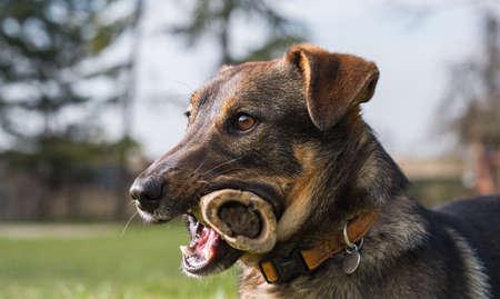 hueso de perro: Perro lindo con un hueso