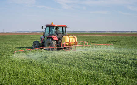 Tractor spraying wheat field with sprayer