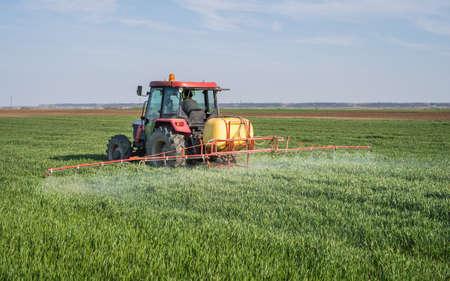 Tractor sproeien van tarwe veld met spuit