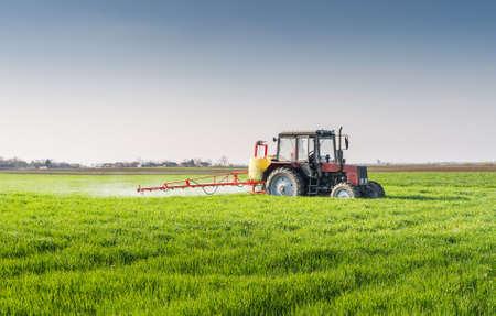cultivo de trigo: Tractor fumigaci�n de campo de trigo con el rociador Foto de archivo