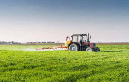 agricultural: Tractor spraying wheat field with sprayer