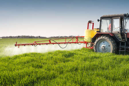 agriculture machinery: Tractor spraying wheat field with sprayer