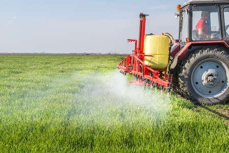 crop sprayer: Tractor spraying wheat field with sprayer