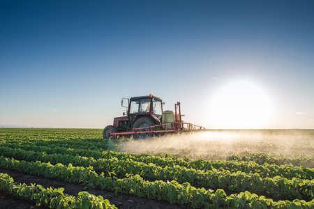 cosecha de trigo: Tractor fumigación campo de soja en la primavera Foto de archivo