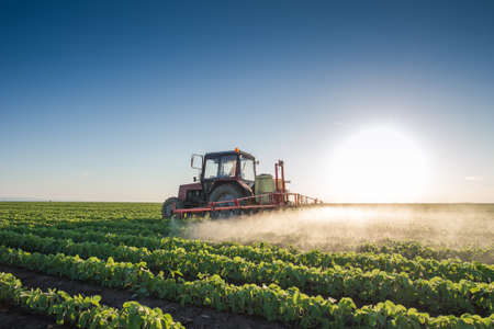 Tractor spraying soybean field at spring Stock Photo