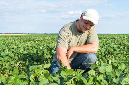 joven agricultor: Granjero joven en campos de soja Foto de archivo