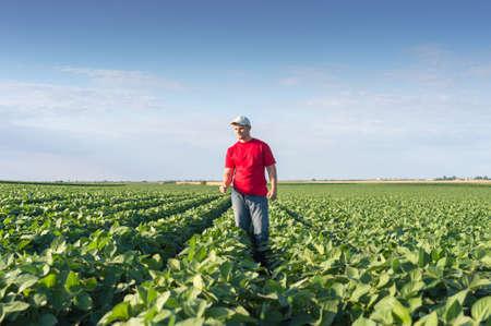 agricultor: Granjero joven en campos de soja Foto de archivo