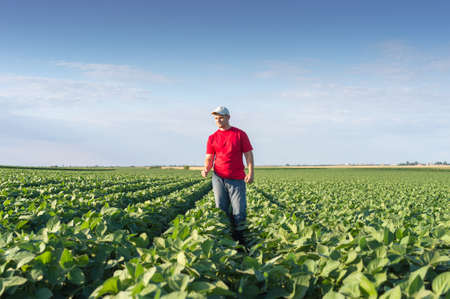 farmlands: Young farmer in soybean fields